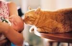 Можно ли грудному ребенку и кошке находиться в одном доме?